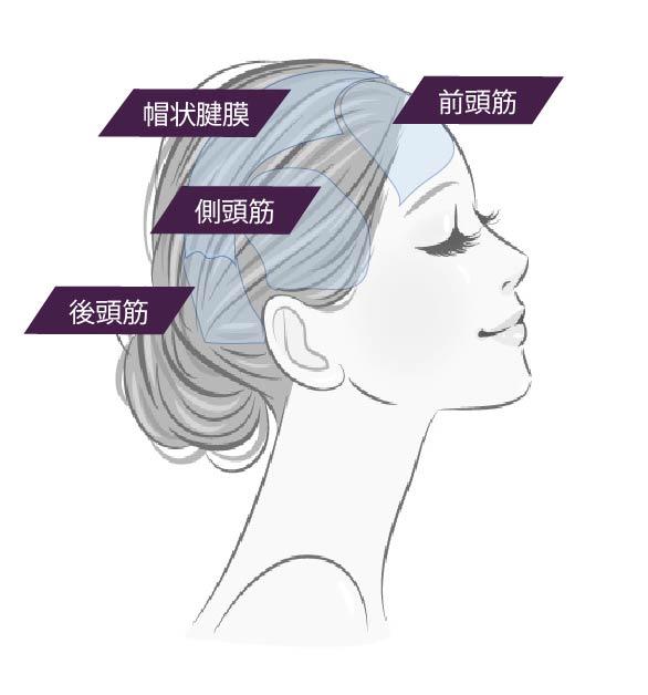 頭は筋肉と筋膜